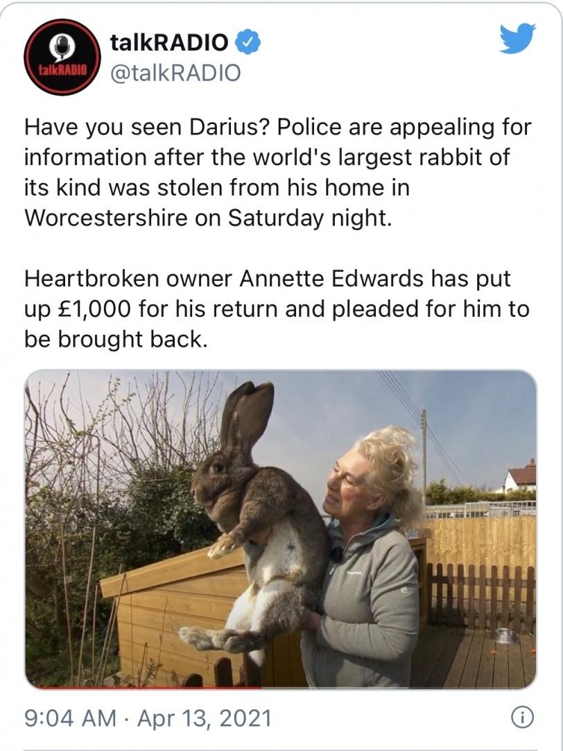 سرقة أكبر أرنب في العالم... وألف جنيه إسترليني لمن يعيده!